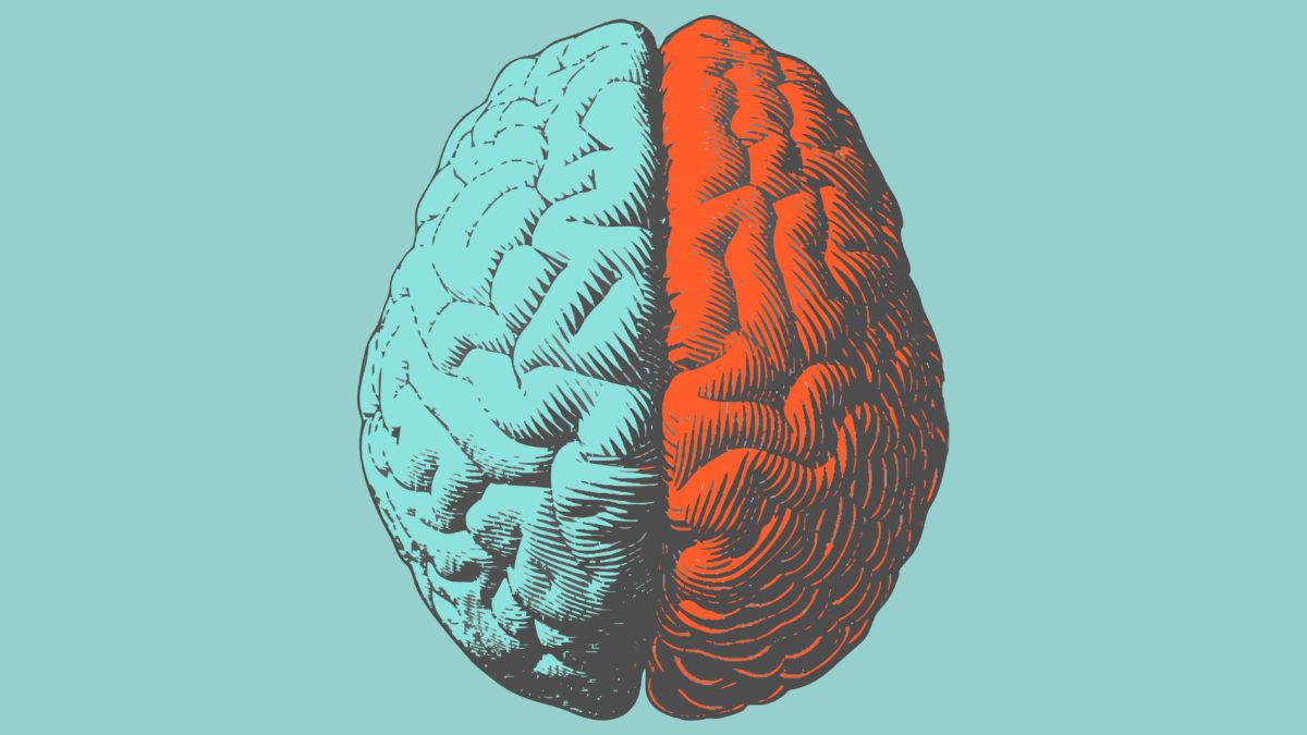 50% d'augmentation dans le cerveau