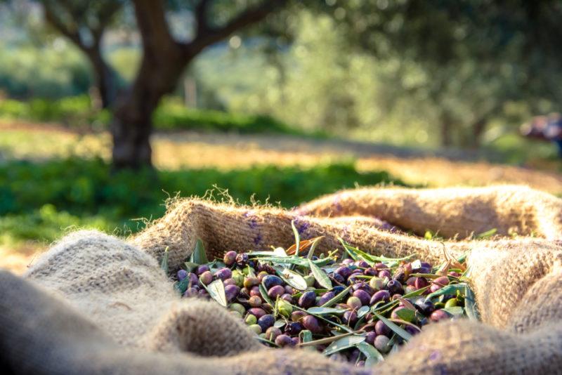 La meilleure huile d'olive de France