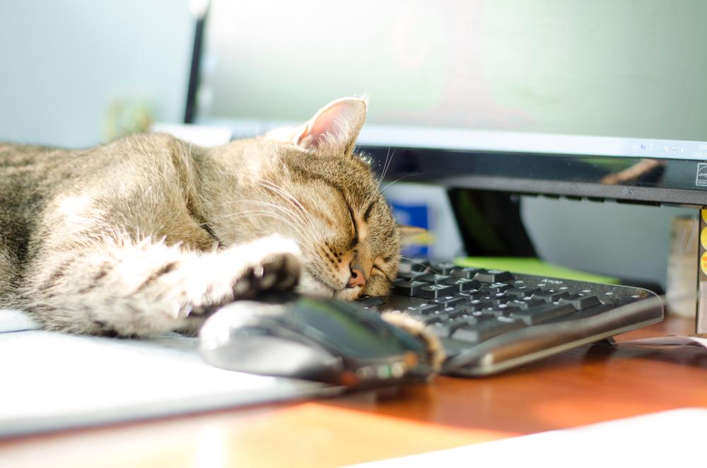 Comment je me suis converti à la sieste