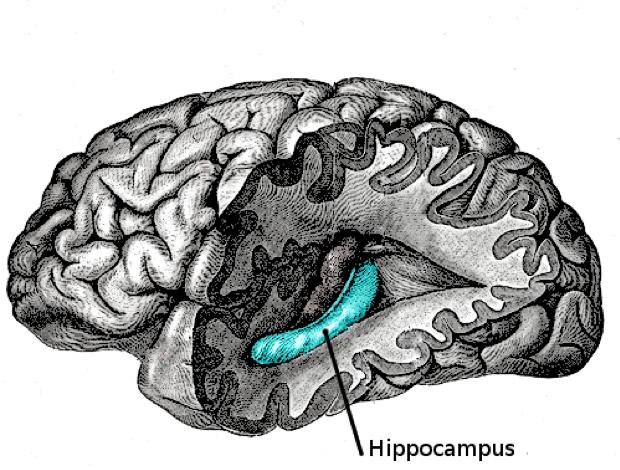 Alzheimer et le voyage