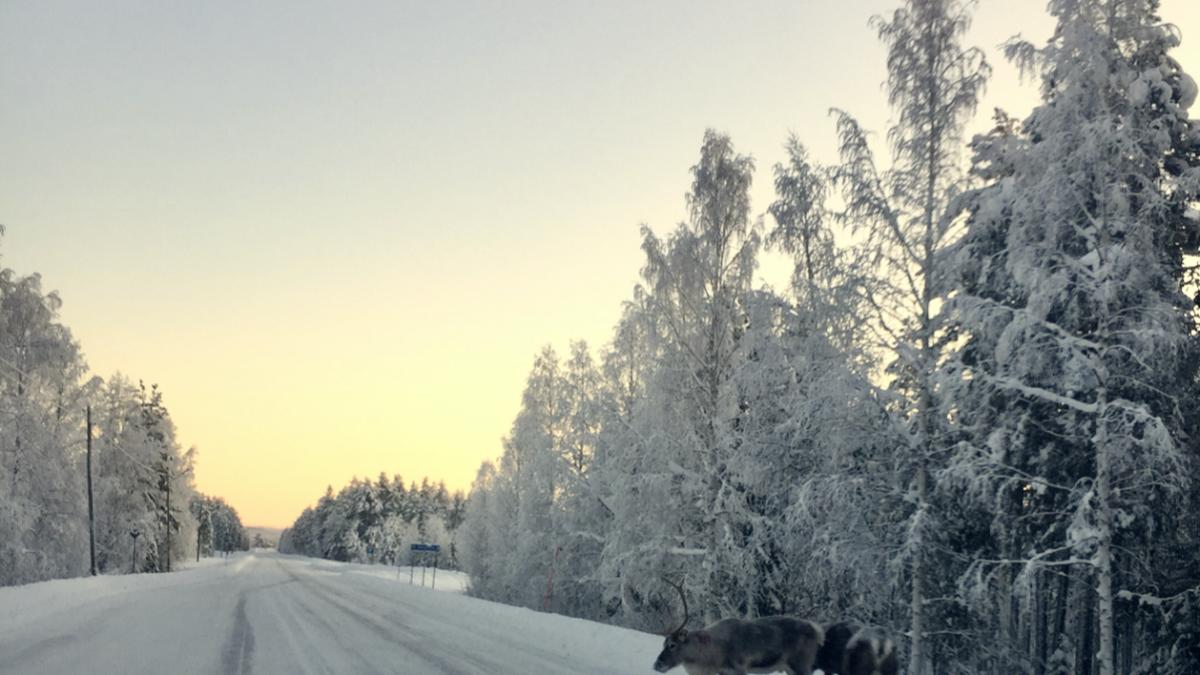 Même la Laponie n'est pas épargnée