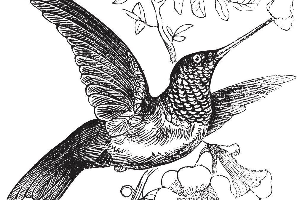 L'avocat, le colibri et le Covid